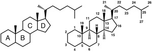 IUPAC recommended ring (left) and atom numbering (right) of the steroid skeleton. (Courtesy of Wikipedia)